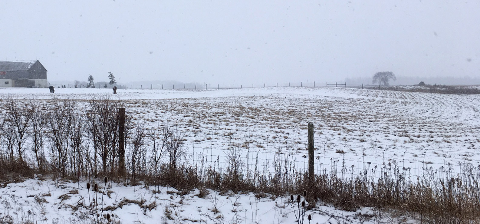 crop field with snow