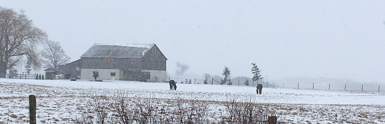 Barn and 2 horses in winter